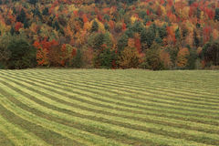 Striped field Royalty Free Stock Photo