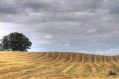 Striped field Stock Photo