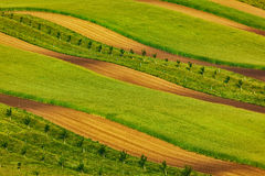 Striped fields of South Moravia Royalty Free Stock Image