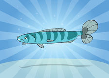 Striped fish Royalty Free Stock Photo