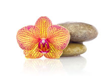 Striped flower of orchid with wet stones Royalty Free Stock Photos