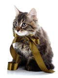 The striped fluffy cat with a bow sits on a white background. Royalty Free Stock Photography