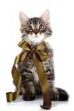 The striped fluffy cat with a bow Royalty Free Stock Photos