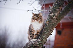 Striped fluffy cat on a winter walk Royalty Free Stock Photos