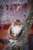 Striped fluffy cat on a winter walk Stock Photos