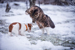 Striped fluffy cat on a winter walk Royalty Free Stock Photography