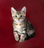 Striped fluffy kitten sitting on burgundy Royalty Free Stock Photo