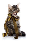 Striped fluffy licking lips cat with a bow Stock Photography