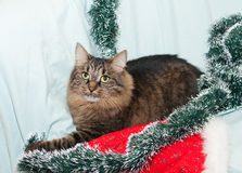 Striped fluffy Siberian cat lies on Christmas tree Royalty Free Stock Photos