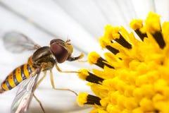 Pollination Stock Photo
