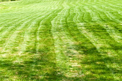Striped freshly mowed garden lawn Stock Photo
