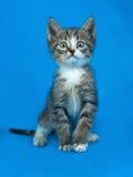 Striped frightened kitten sitting on blue Royalty Free Stock Photos