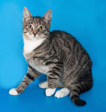 Striped frightened kitten sitting on blue Royalty Free Stock Images