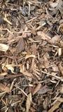 Striped garden bark Stock Images