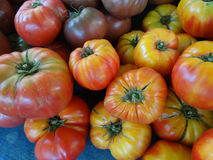 Striped German tomato, Solanum lycopersicum Striped German Royalty Free Stock Photos