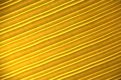 Striped golden cloth. Abstract background of striped golden cloth lighted from behind Stock Image