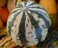 Striped gourd, Cucurbita pepo Stock Photography