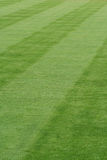 Striped grass Stock Photography
