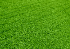 Striped grass. Green grass with cross striped stock images