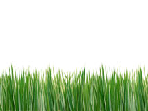 Striped grass isolated on white Stock Photography