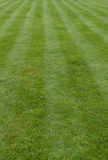 Striped grass lawn Royalty Free Stock Image