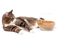 Gray cat and dry food. Striped, gray cat and a heap of dry food,  on white Royalty Free Stock Photography