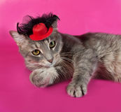 Striped gray cat with red hat lying on pink Royalty Free Stock Images