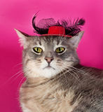 Striped gray cat with red hat lying on pink Stock Photo