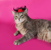 Striped gray cat with red hat lying on pink Royalty Free Stock Photo