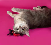 Striped gray cat with red hat lying on pink Royalty Free Stock Photos