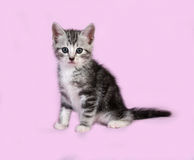 Striped gray kitten sitting on pink Royalty Free Stock Photography