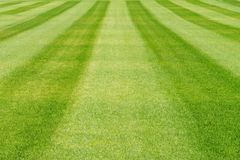Striped green grass lawn background Royalty Free Stock Image