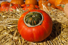 Striped green-orange pumpkin on the hay Royalty Free Stock Photo