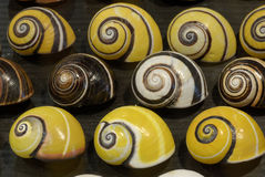 Striped Ground snails Royalty Free Stock Photo