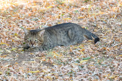 Striped homeless cat looks suspiciously Royalty Free Stock Photography