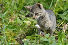 Striped kitten Stock Photo