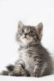 Striped kitten. On a light background Royalty Free Stock Photography