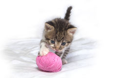 Striped kitten Royalty Free Stock Photo