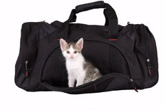 Striped kitten in the bag. Isolated royalty free stock photos