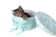 Striped kitten in blue gift box Royalty Free Stock Photos