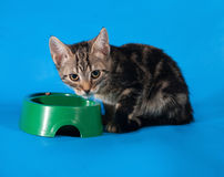 Striped kitten eats from bowl green on blue Royalty Free Stock Photography