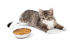 Striped kitten eats a dry feed. The striped kitten eats a dry feed, is on a white background Royalty Free Stock Photo