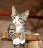 Striped kitten with green eyes lying on the climbing frame Royalty Free Stock Photos