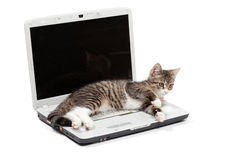 Striped kitten and  laptop Stock Image