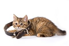 Striped kitten. With large collar isolated on white royalty free stock photo