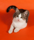 Striped kitten lies on orange Stock Images