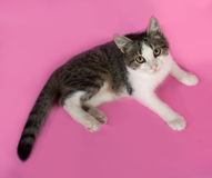 Striped kitten lies on pink Royalty Free Stock Image