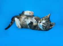 Striped kitten lying on blue Stock Photography