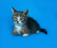 Striped kitten lying on blue Stock Images