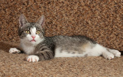Striped kitten lying on  couch Stock Photography